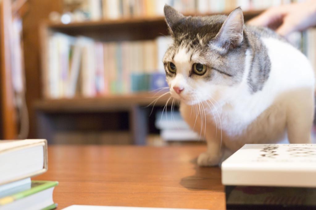 """甲斐さんの飼い猫""""ビド""""おばあちゃん"""