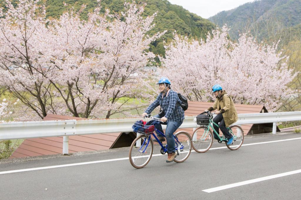 桜の横を疾走
