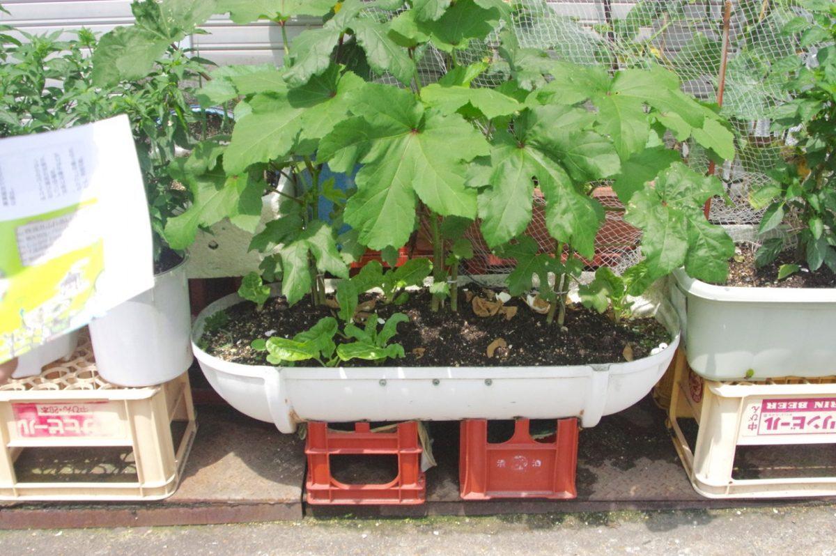 ブイの鉢植え