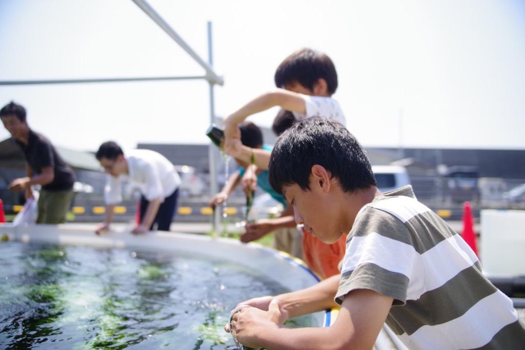 青海苔作り体験
