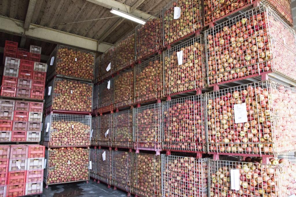 りんご保管庫