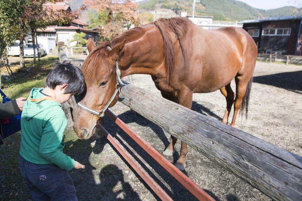 ひとなつこい馬