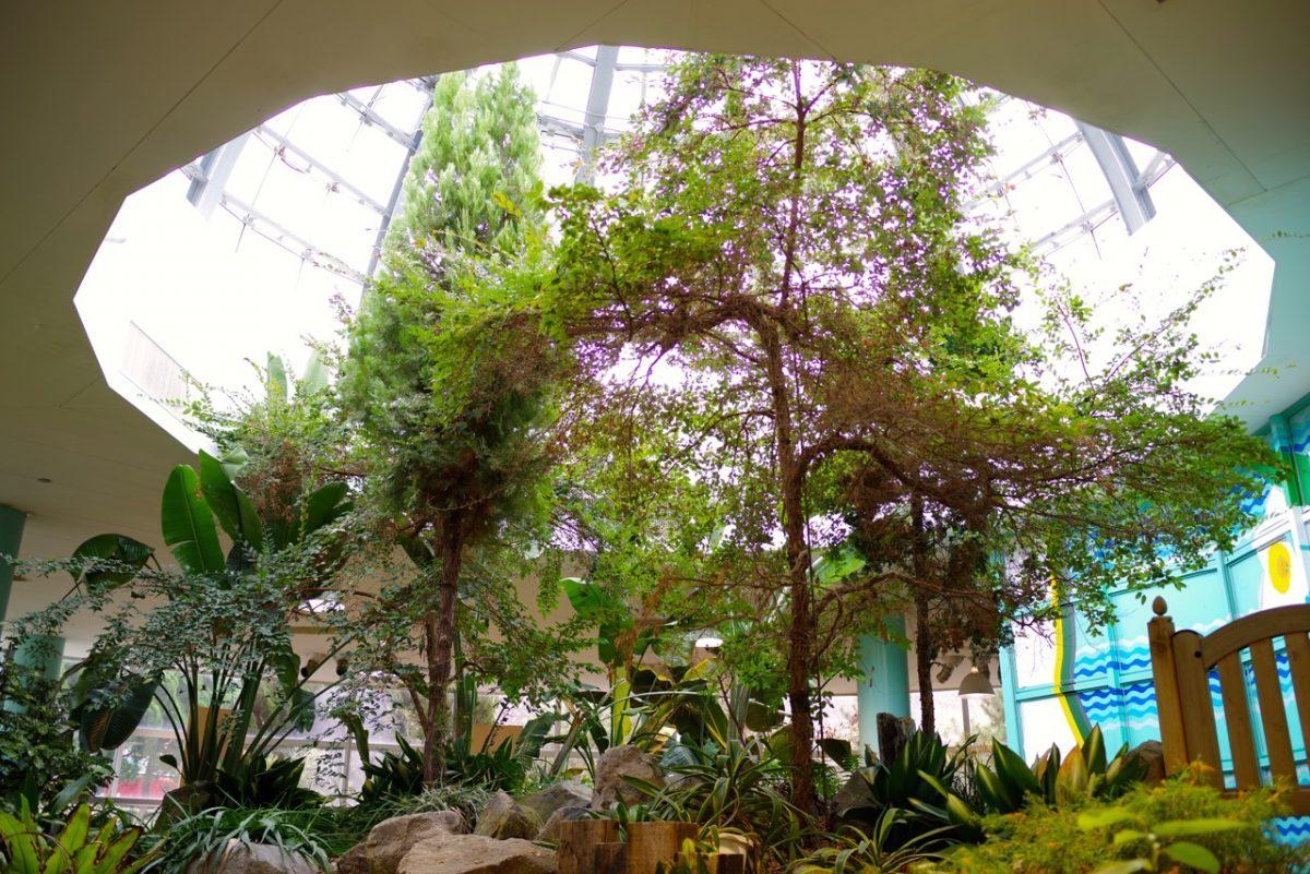 水仙の里温室