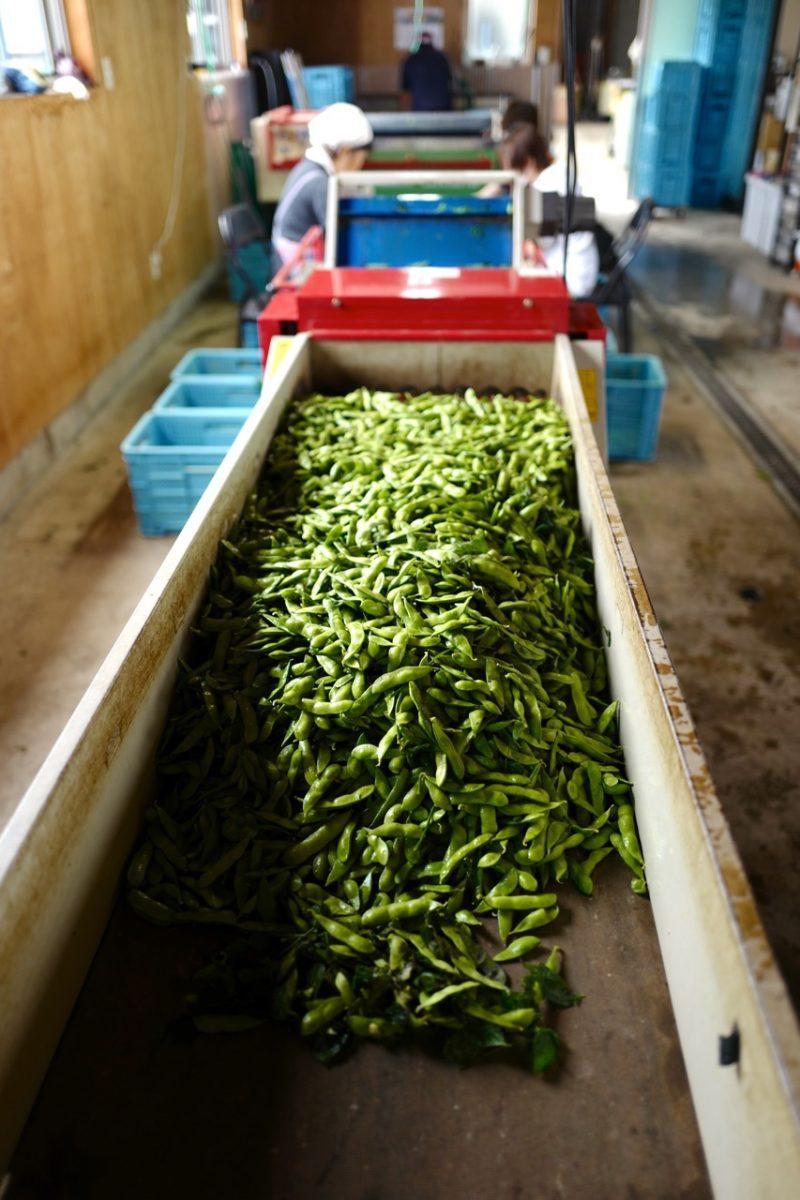 枝豆マシン