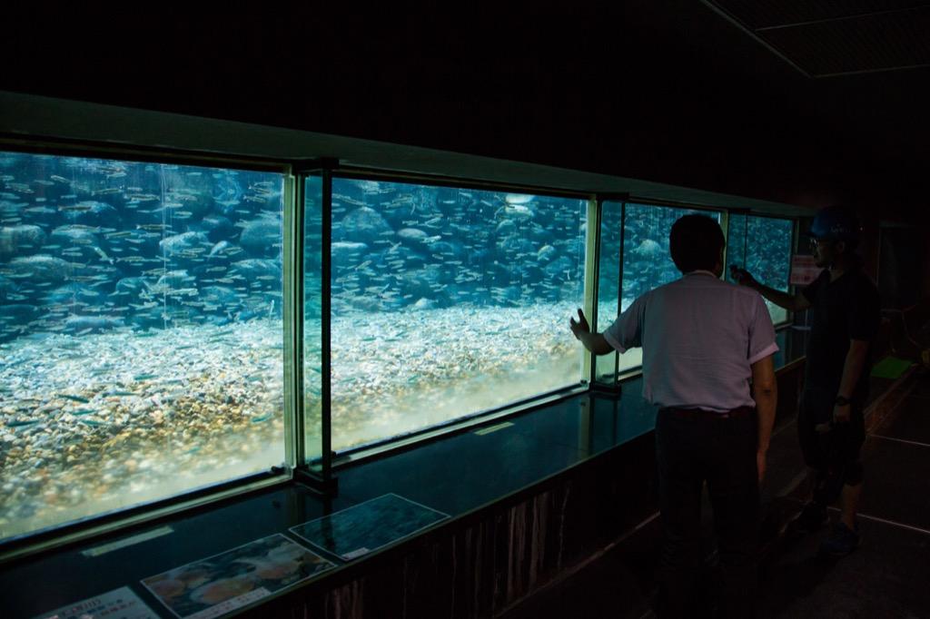 生態観察室