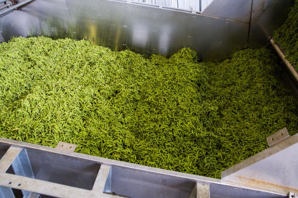 大量の枝豆原料